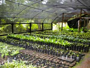 long-shot-of-greenhouse