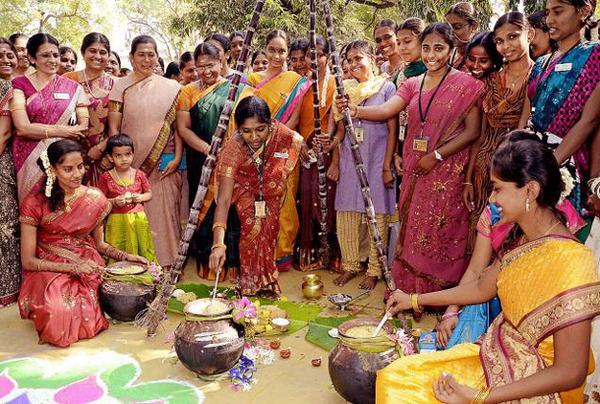 Pongal-Festival